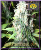 Freedom of Seeds Dieselicious Feminized Ganja Weed Strain